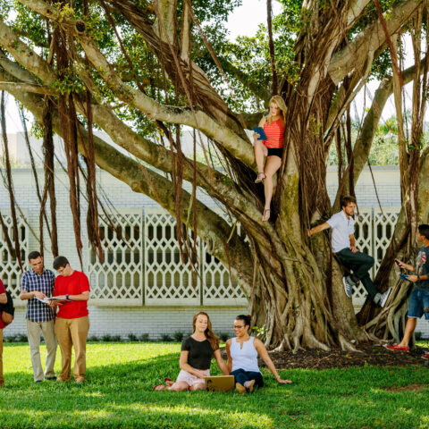students gather under a banyan tree on campus