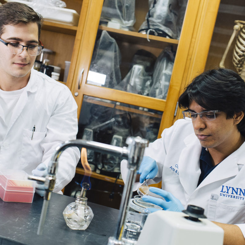 Students working in the lab at the College of Arts and Sciences.